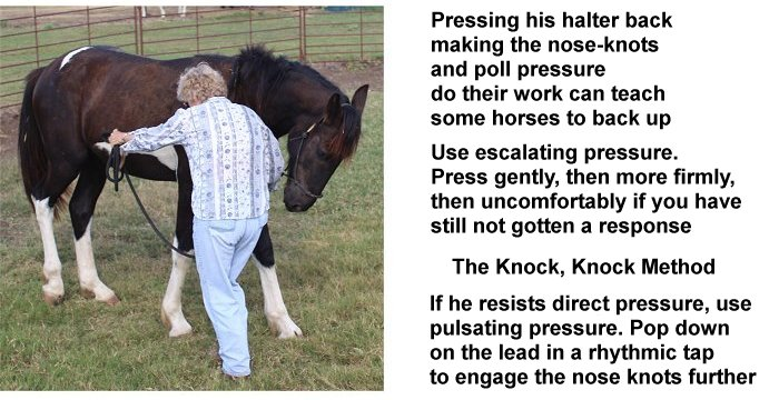 horse backing up to halter knot pressure