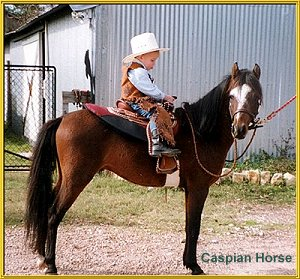 caspian horse with child rider