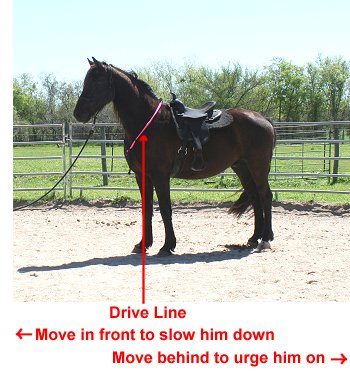 picture of the drive line on a horse