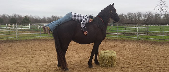 Mount your horse for the first time using jeffrey's method