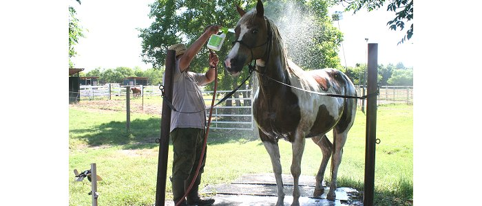 A well-behaved horse getting a bath
