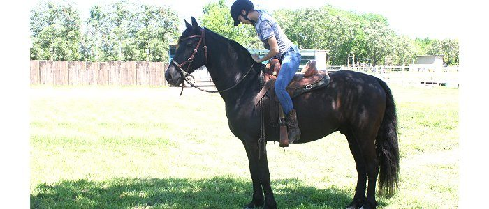 Solve horse mounting problems