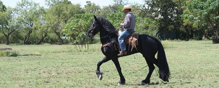 learn to train and handle a stallion