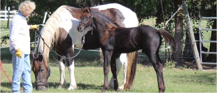 calm foal and dam